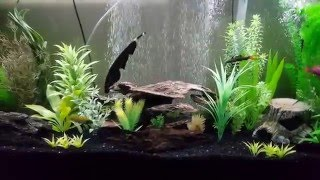 My 4 year old Black Knife Ghost Fish