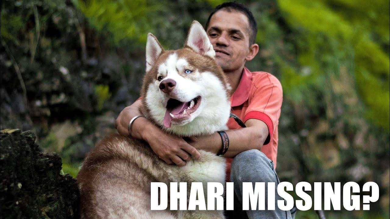 WHERE IS DHARI??? 😲😲😲 THE HIMALAYAN HUSKY