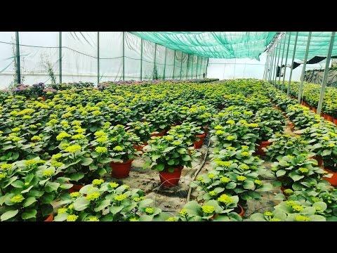 Hydroponics Vegetable Plants System