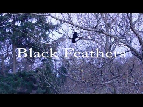 Black Feathers - ATVA 2016
