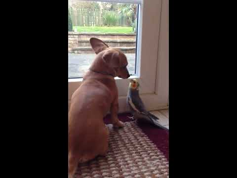 Bird Sings to Dog Part 2