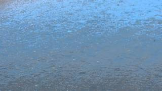 20140602荒川上八木田橋付近のツバメたちの水浴び?