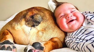 Funny Babies Playing With Dogs  Baby and Pet Videos [Funny Baby]