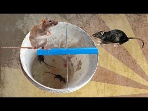 rottef lde hjemmelavet i cambodja fantastisk fangstrotte ved vandf lder youtube. Black Bedroom Furniture Sets. Home Design Ideas