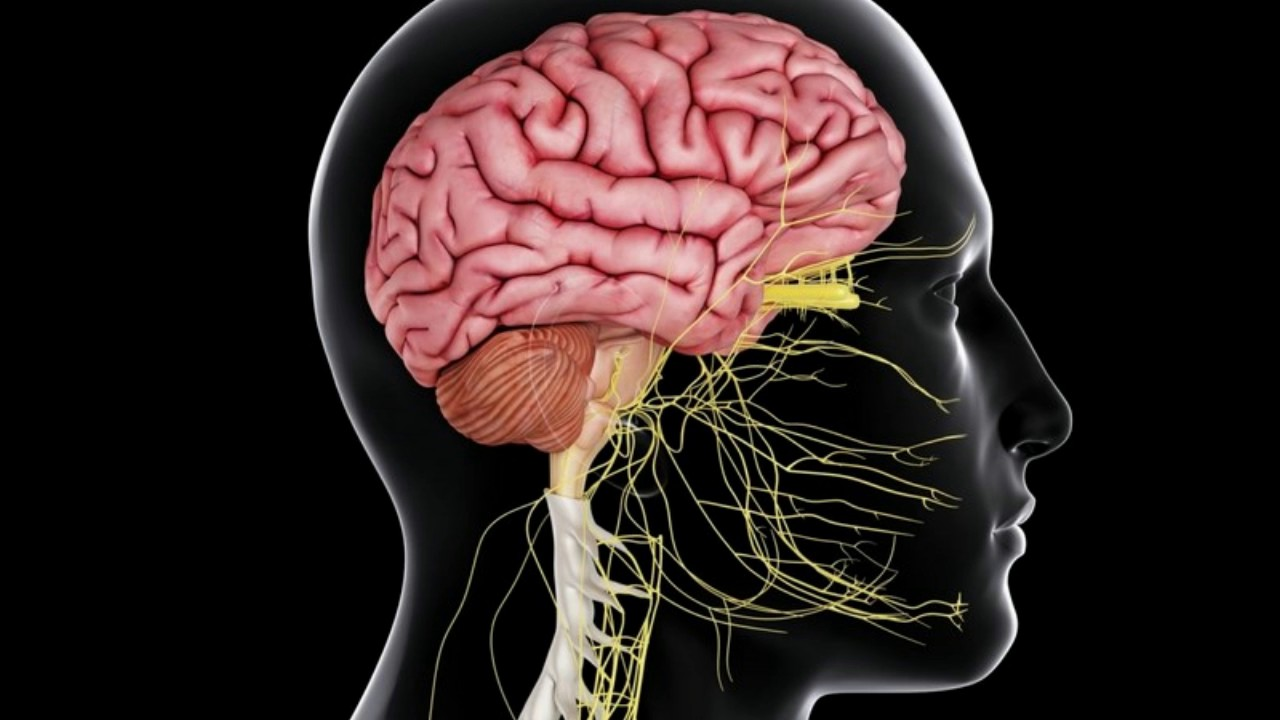 Difference Between Thalamus and Hypothalamus - YouTube