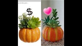 Dollar Tree DIY Pottery Barn Dupe~ Succulent Pumpkin