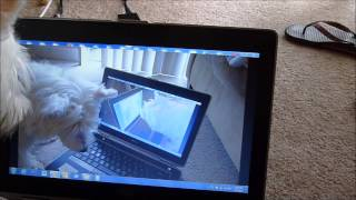 Westie Watches Himself Watching Himself Watch Cat Video On Youtube