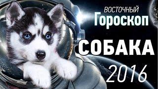 Собака.Восточный ( китайский ) гороскоп на 2016 год