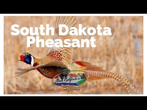 Bob Redfern's South Dakota Pheasant Hunting