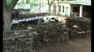 Sandalwood Smuggling - Sandal Ağacı Kaçakçılığı