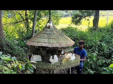 Beautiful Pigeon Home Making By Smart Village Boy - Amazing Bird House