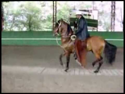 Dancing Horses Music Video