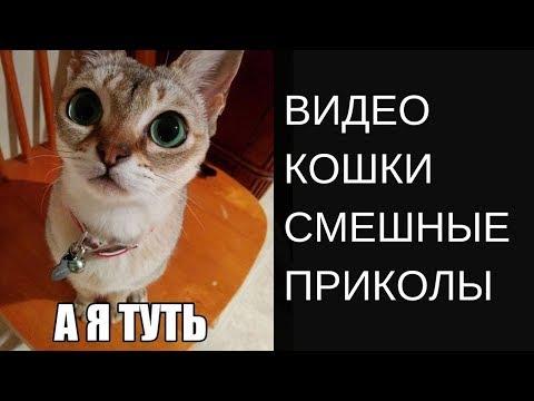 Смешные приколы с Котами Видео Кот