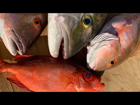 AMAZING Deep SEA Fishing {Catch Clean Cook} Sesame Seared AmberJack