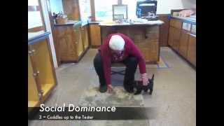 Portuguese Water Dog Puppy Temperament Evaluation