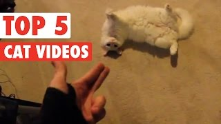 Top Cat Videos || Feb 5 2016