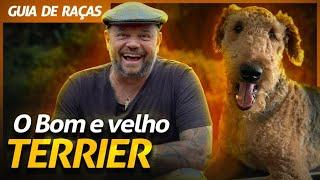 TERRIER, UMA LINHAGEM DE CÃES RÚSTICOS!   RICHARD RASMUSSEN