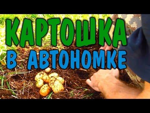Вопрос: В тундре растёт картофель?