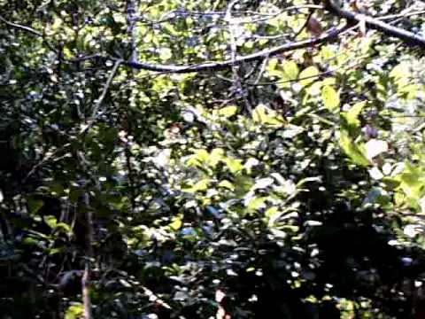 Hammock Nature Trail, Lori Wilson Park, Cocoa Beach, Florida
