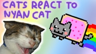Repeat youtube video Cats React to Nyan Cat