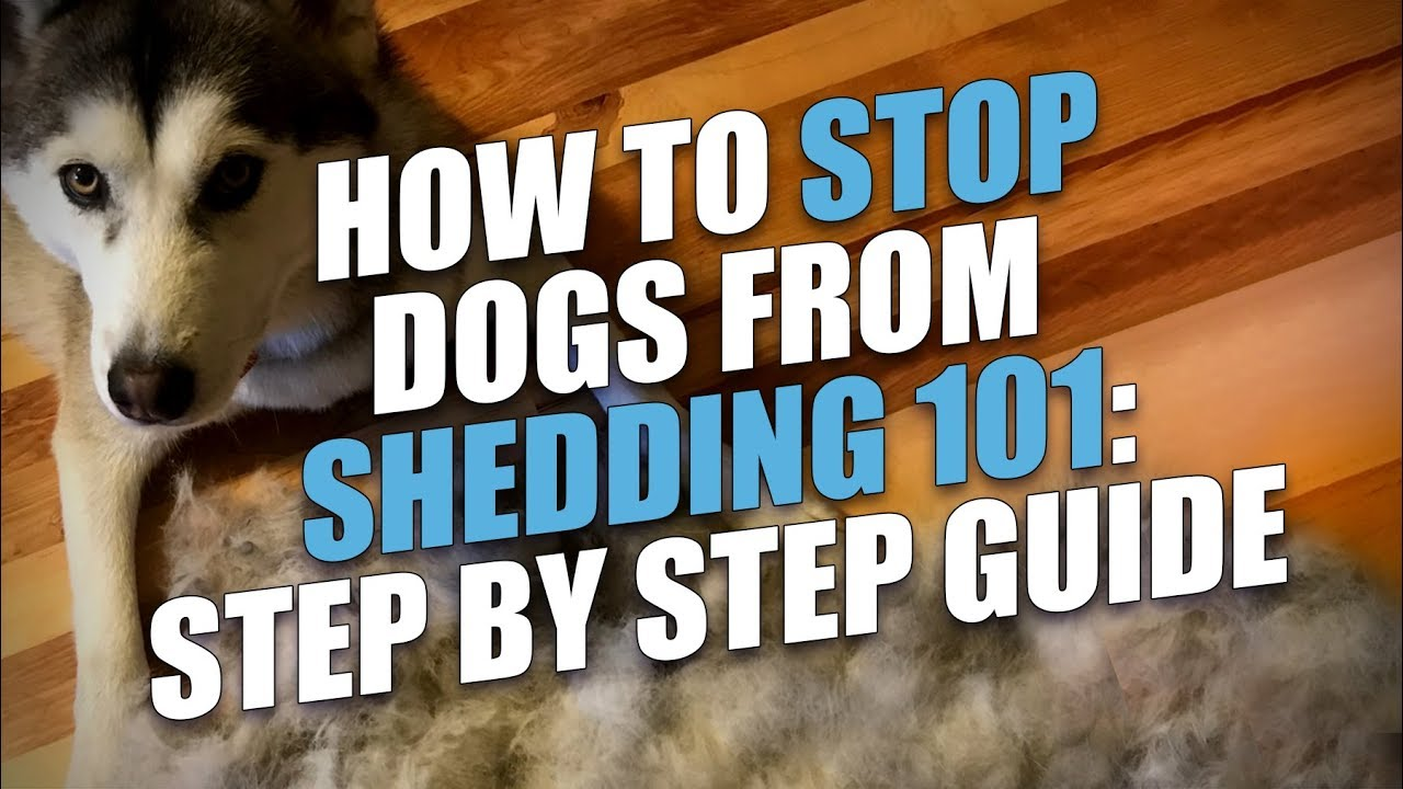 minimize how dog sheds excessive shedding stop to or prevent tips my