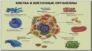 Клеточные технологии. ДНК. Хромосома. Геном. Программа