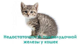 Недостаточность поджелудочной железы у кошек. Ветеринарная клиника Био-Вет.