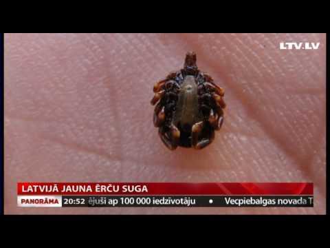 Latvijā jauna ērču suga