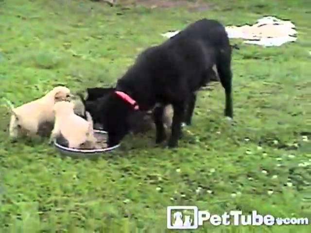 Feeding Time Fiasco- PetTube