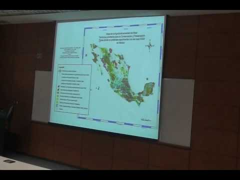 Transgenic maize in Mexico 3 of 8.avi