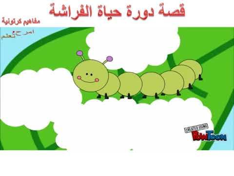 دورة حياة الفراشة تصميم الطالب عبدالله باسل مشة Youtube