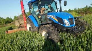 Siloda Yemi Tükenen Çiftçi Buğdayını Silaj Yapıyor