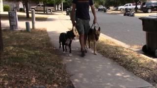 Reactive Dog Exercise. Precision K9 Work Dog Training