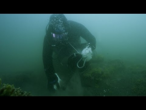 The Crabber's First Dive | Bering Sea Gold