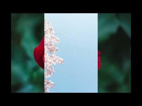 Download Flower  196