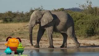 [프뢰벨쏭티쳐] 프뢰벨 생생다큐 자연관찰 코끼리 영상 …