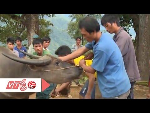 Xem người Hà Nhì cúng trâu cầu mùa | VTC