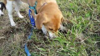 http:/osanpoikuyo.blog112.fc2.com/ ワン9匹犬まみれ里親探し日記.