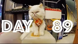 CAT CAFE !!! | Day 89