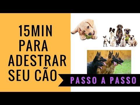 ADESTRAMENTO CANINO PASSO A PASSO? INICIANTE AO AVANÇADO