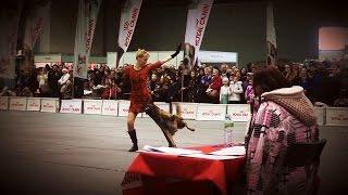 Малинуа (Бельгийская овчарка) - танец «Милорд»(Зоошоу в Гавани | HTM | Мастер | 1 е место | Ильина Полина и Илим Плейлист Зоошоу в Гавани http://goo.gl/JVxgfR Плейлист..., 2015-04-02T19:51:33.000Z)