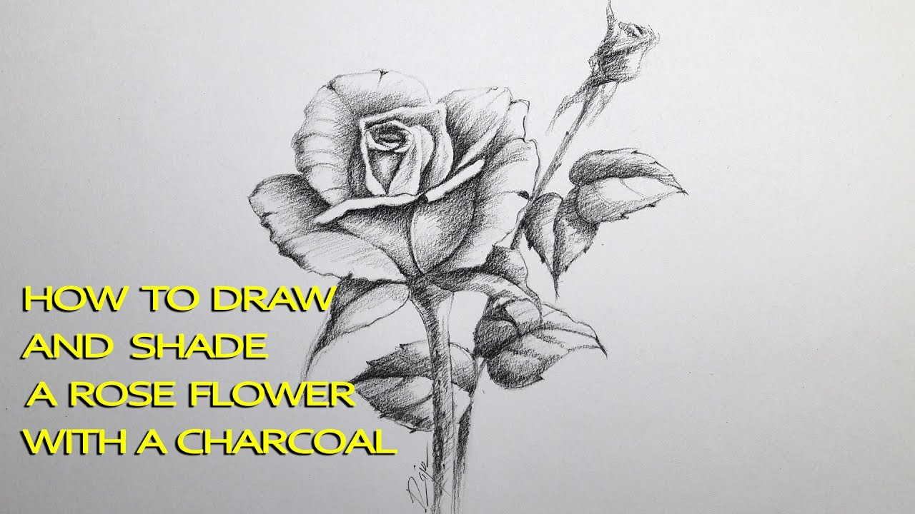 How to draw and shade A Rose flower with charcoal pencil ...