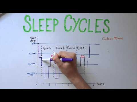 Sleep 5: Types of Sleep and Sleep Cycles
