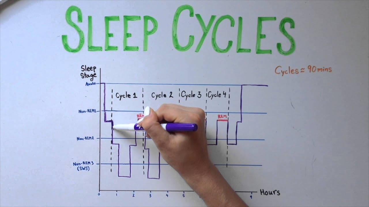 sleep 5 types of sleep and sleep cycles