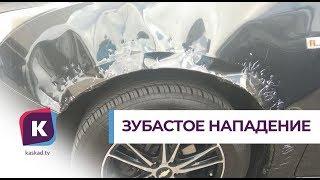 Бродячие собаки погрызли автомобиль калининградца