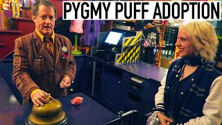 Adopting A Pygmy Puff