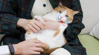 花花与三猫-幸运观众到家撸猫-不仅铲屎还穿女装-神秘愿望让猫欲哭无泪