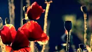 becixmat - Relax 1157 - Tiché kvety - Silent flowers