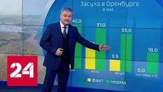 Смотреть видео Погода 24: степные пожары продолжаются - Россия 24 онлайн