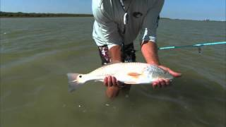 Baffin Bay Texas Redfish and Black Drum Setup DOA 2.75 Shrimp